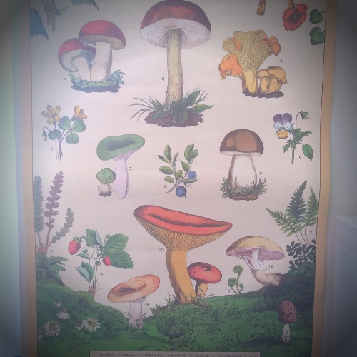 A vintage styled poster of different wild plants such as mushrooms and wild berries.